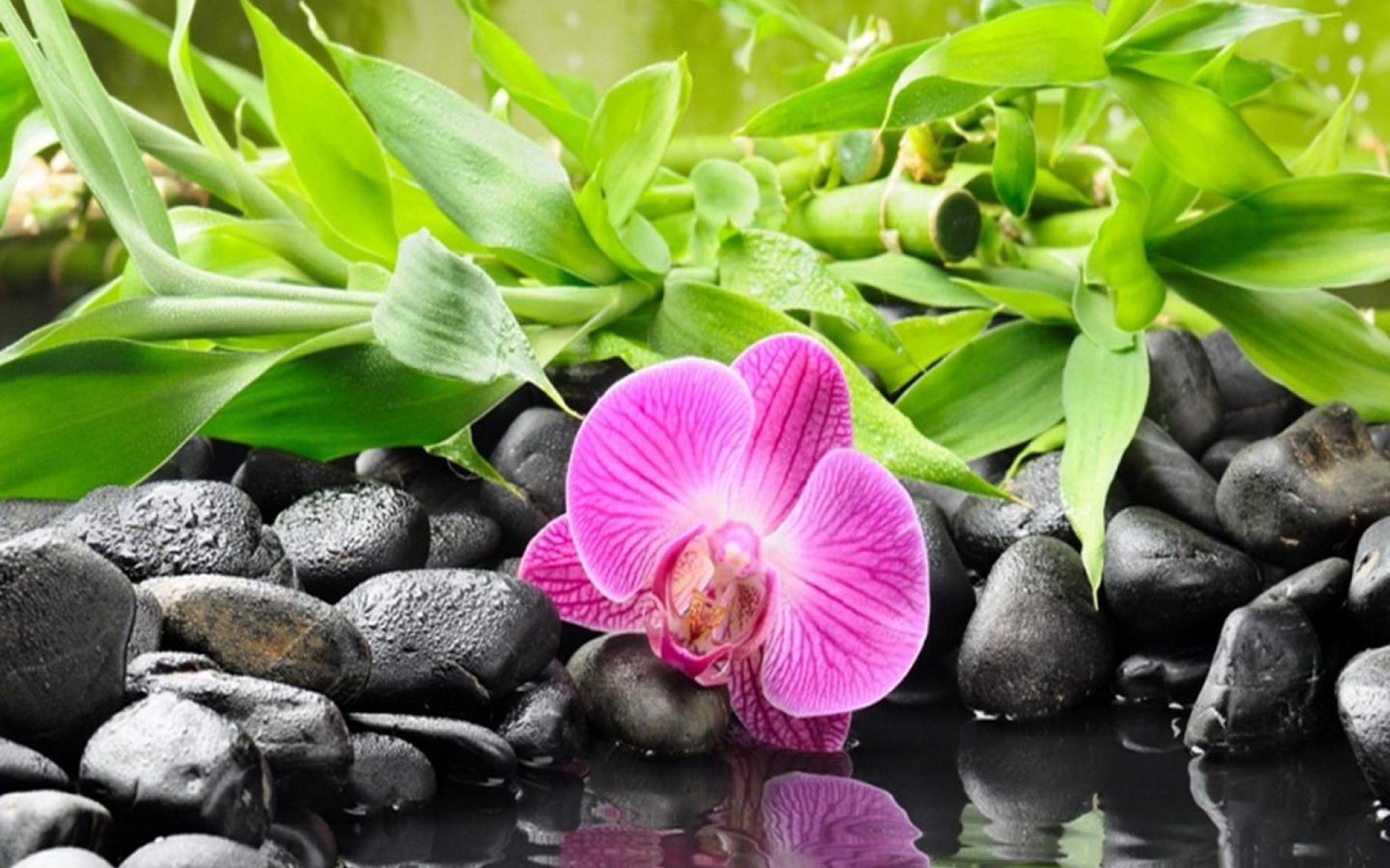 Hot-stones-nurturing-massage