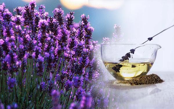 aromatherapy-massage-lavender